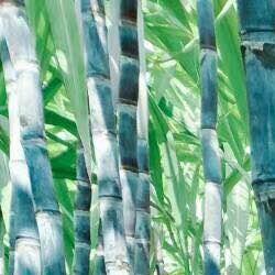 北方甘蔗种植时间甘蔗种植技术甘蔗什么时间种植