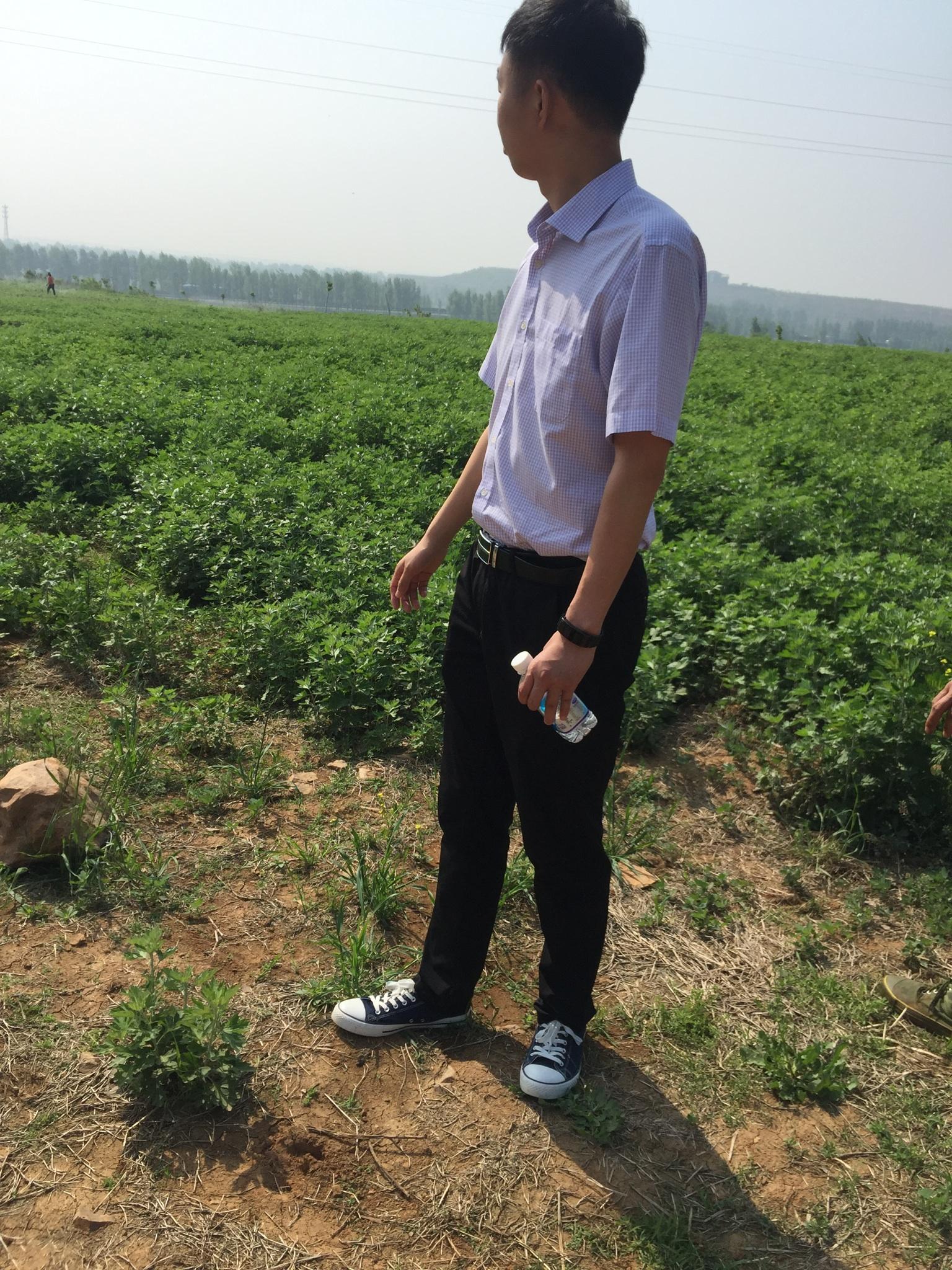 艾草的种植及管理技术
