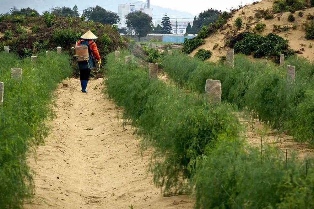 芦笋田专用除草剂苗后专用除草剂使用方法图2