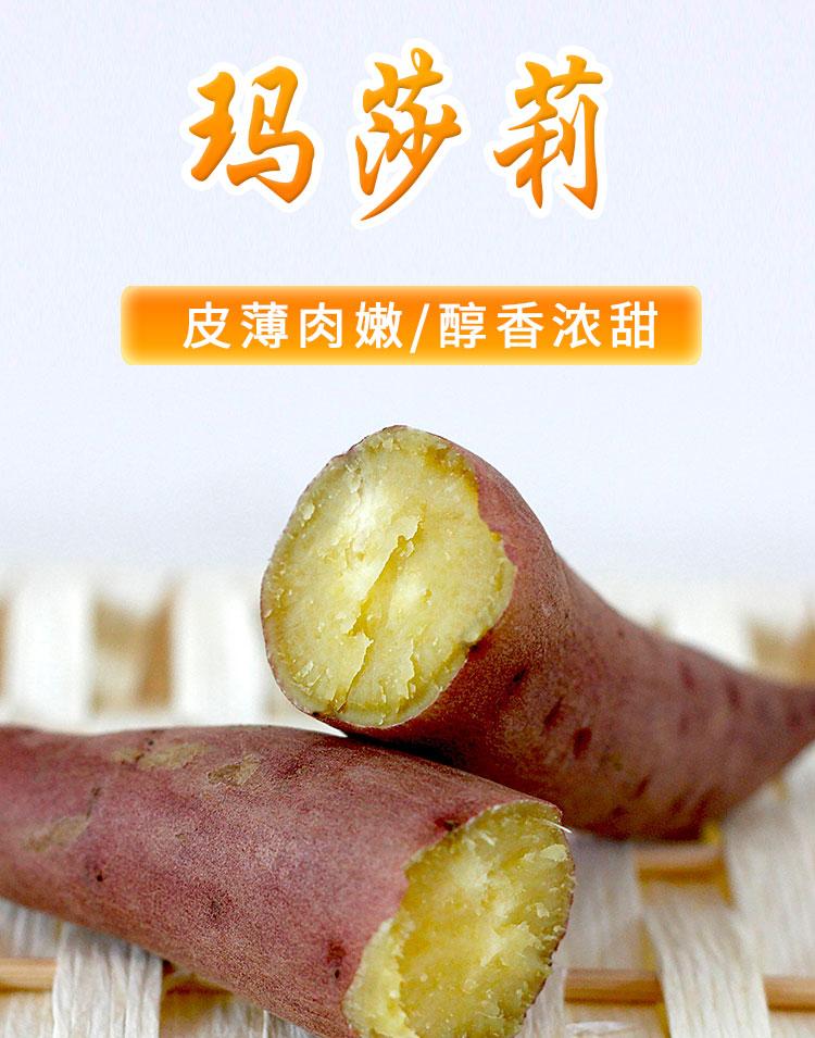 黄金蜜薯玛莎莉红薯苗