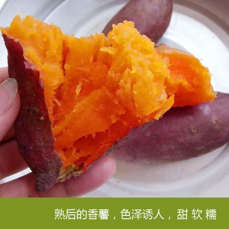 普薯32红薯和烟薯25的区别